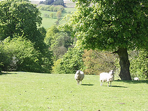 Sheep Bed and Breakfast Forest of Bowland